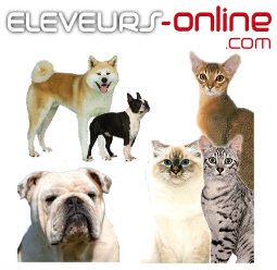 Eleveur online